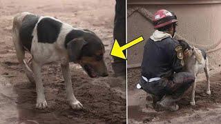Щенок вёл спасателей к вулкану. Когда они дошли до места, он заплакал и потребовал объятий.