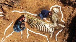 Странные существа и гигантские животные. Самые необычные находки археологов