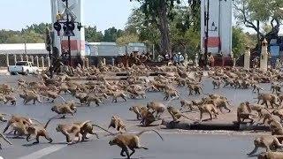 Дикие животные выходят в города. Природа возвращет своё