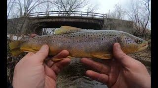 Fishing for TROUT in ULTRA CLEAR Water