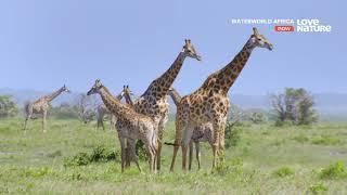 Водный мир Африки - Чудеса заболоченных мест. Документальный фильм в Ultra HD 4K