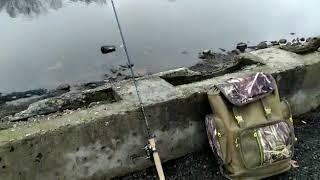 Канал имени Москвы. Мало рыбы.