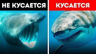 Самые загадочные морские существа из всех, которые когда-либо существовали (Не все акулы кусаются!)