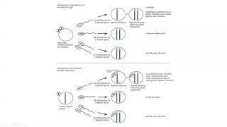Биология 2 Весна 2020 Лекция 12 Часть 4