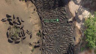 Остров в клетку. Необитаемый остров обитаемый. Бегемоты в спа и др