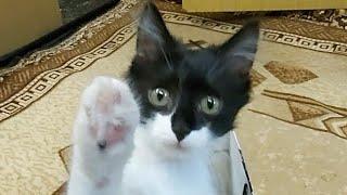 Как приручить дикого котёнка Мама кошка бросила/Домик для кота своими руками 25ч.