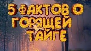 5 фактов о горящей тайге в Красноярском крае