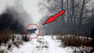 То что ученые обнаружили в лесах чернобыля ШОКИРОВАЛО весь мир