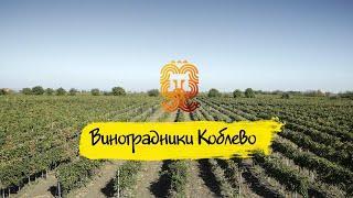 Виноградники Коблево. Удивительные места в Украине. Винзавод Коблево. Экскурсии Коблево